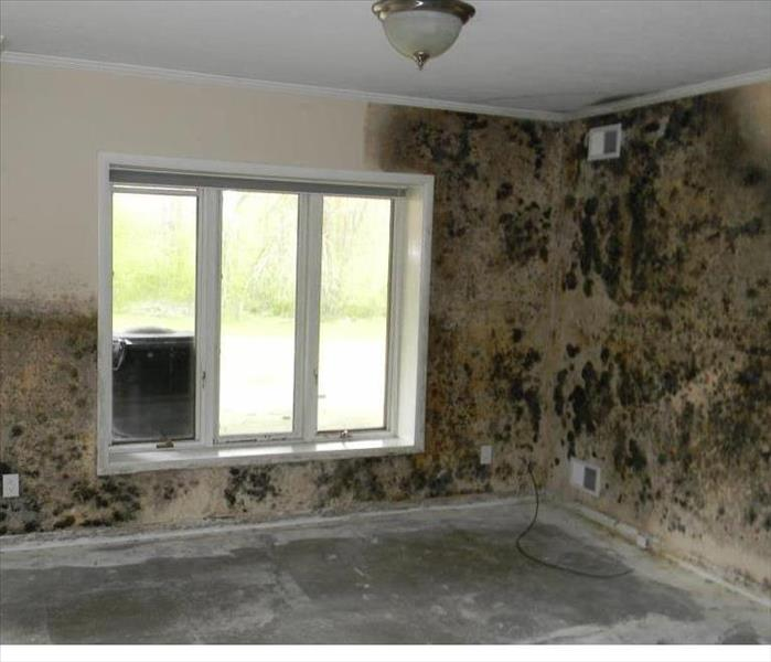 Mold Remediation Does your Clovis home have a Mold Problem?